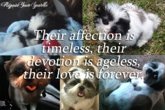 Image-8-Dogs-Their-Affection-is-Timeless